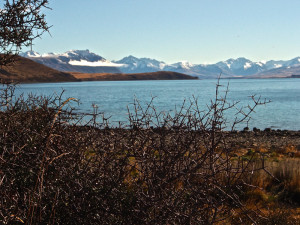 Matagouri on the shores of Lake Tekapo