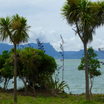 Island refuges – Matakohe-Limestone Island in Northland